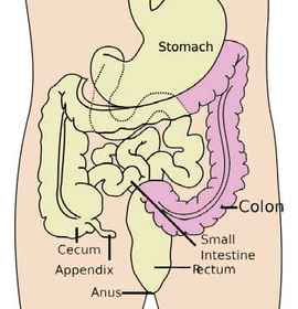 colorectal-anatomy